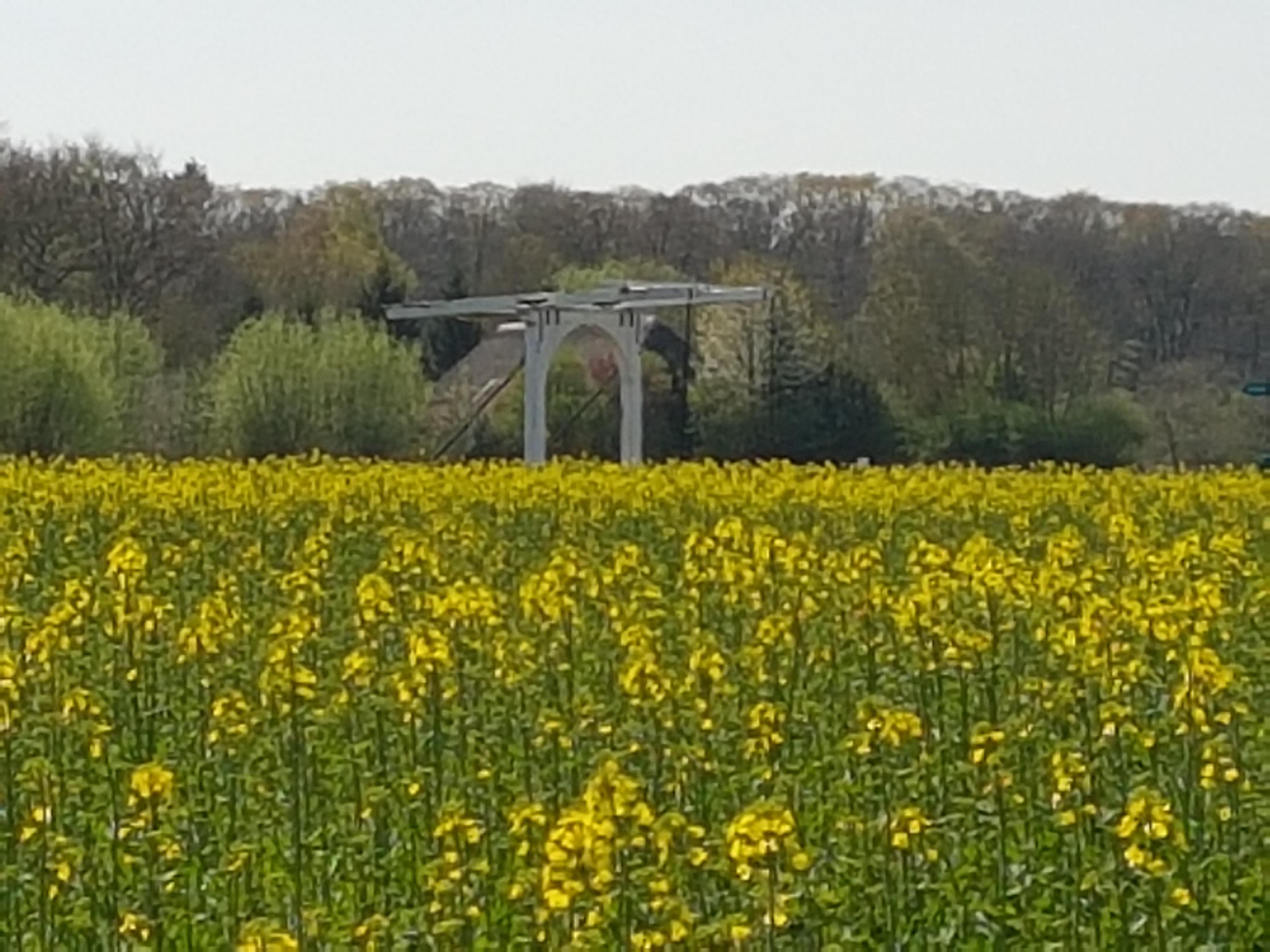 Witte brug op de Velhorst - vlakbij Landgoed Ehzerwold